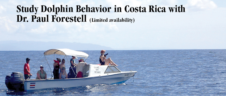 Study dolphin Behavior in Costa Rica with Paul Forestell (Limited availability)